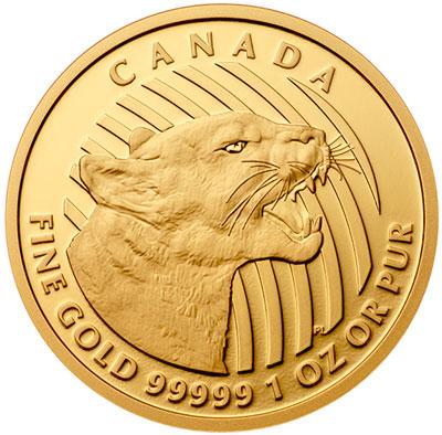growling-cougar
