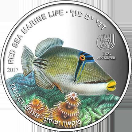 palau-2017-5-triggerfish-a